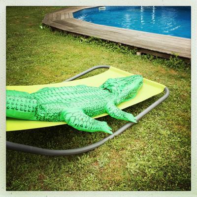 150721 Krokodil Zwembad 850Px 6781