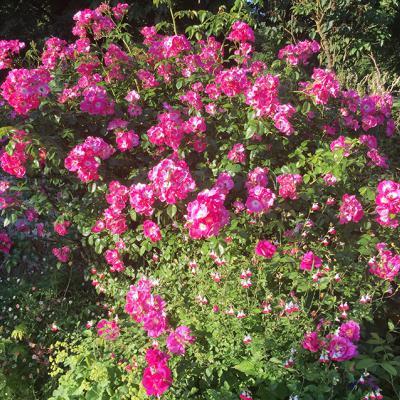 1606 Lgt Gite Tuin Jardin 850Px 5296